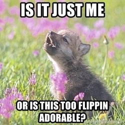 Baby Insanity Wolf - is it just me Or is this too flippin adorable?