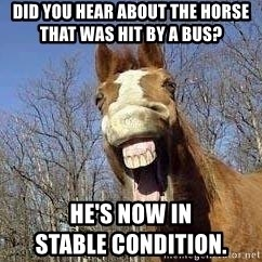 Horse - did you hear about the horse              that was hit by a bus? he's now in                                            stable condition.