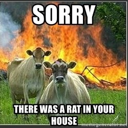 Evil Cows - Sorry There was a rat in your house