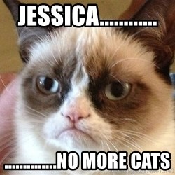 Angry Cat Meme - jessica............ ..............no more cats