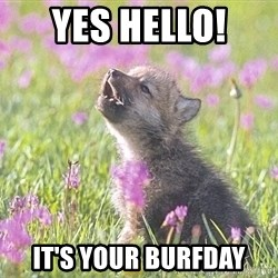 Baby Insanity Wolf - Yes hello!  It's your burfday