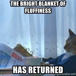 newspaper cat realization - The bright blanket of fluffiness Has returned