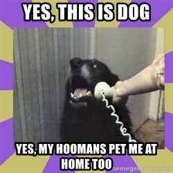 Yes, this is dog! - Yes, this is dog Yes, my hoomans pet me at home too