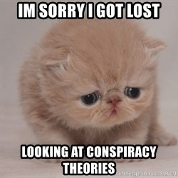 Super Sad Cat - Im sorry i got lost Looking at conspiracy theories