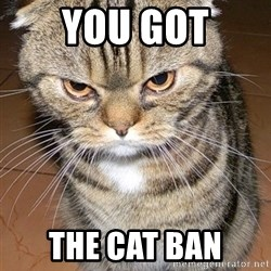 angry cat 2 - You Got The CAT BAn