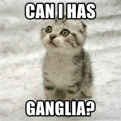 Can haz cat - CaN I HAS GANGLIA?