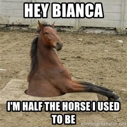 Hole Horse - hey bianca I'm half the horse I used to be