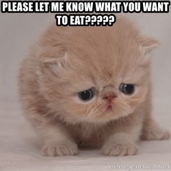 Super Sad Cat - Please let me know what you want to eat?????