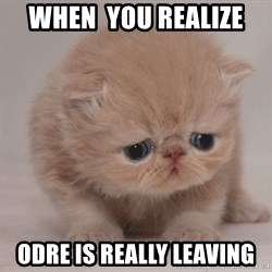 Super Sad Cat - When  you realize  ODRE IS REALLY LEAVING