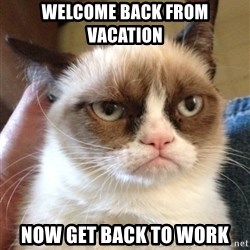 Grumpy Cat 2 - Welcome back from vacation now get back to work