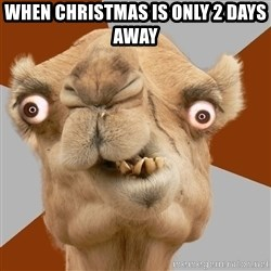 Crazy Camel lol - When christmas is only 2 days away