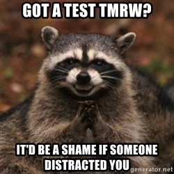 evil raccoon - got a test tmrw? it'd be a shame if someone distracted you