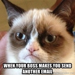 Angry Cat Meme - When your boss makes you send another email