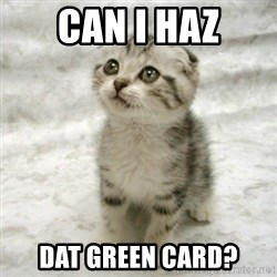 Can haz cat - CAN I HAZ DAT GREEN CARD?