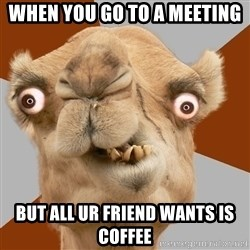Crazy Camel lol - when you go to a meeting but all ur friend wants is coffee
