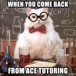 Chemistry Cat - When you come back from ace tutoring