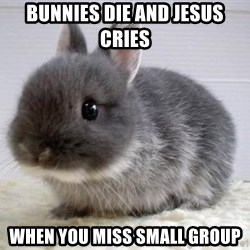 ADHD Bunny - Bunnies Die and Jesus Cries When You miss Small group
