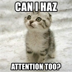 Can haz cat - Can i haz Attention too?