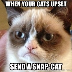 Angry Cat Meme - When your cats upset Send a snap-cat
