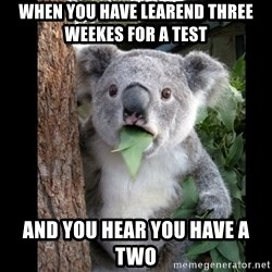 Koala can't believe it - when you have learend three weekes for a test and you hear you have a two