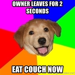 Advice Dog - Owner leaves foR 2 secondS Eat couch now