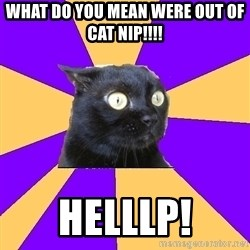 Anxiety Cat - WHAT do you mean were out of CAT nip!!!! HELLLp!