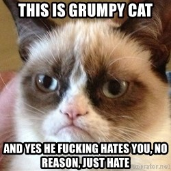 Angry Cat Meme - This is grumpy cat and yes he fucking hates you, no reason, just hate