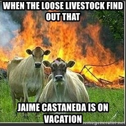 Evil Cows - When the loose livestock find out thaT Jaime castaneda is on vacation