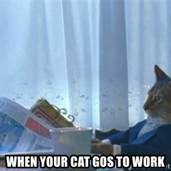newspaper cat realization - when your cat gos to work