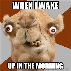 Crazy Camel lol - when i wake up in the morning