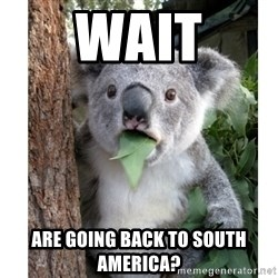 surprised koala - Wait are going back to south america?