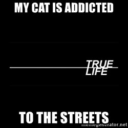 MTV True Life - My cat is addicted To the streets
