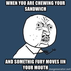 Y U No - when you are chewing your sandwich and somethig fury moves iin your mouth