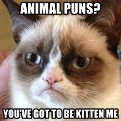 Angry Cat Meme - Animal puns? You've got to be kitten Me