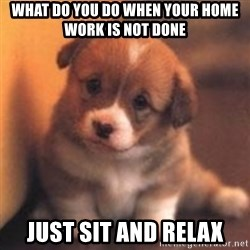 cute puppy - what do you do when your home work is not done  just sit and relax