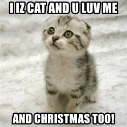 Can haz cat - I Iz Cat And U Luv Me And Christmas too!