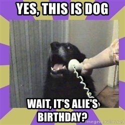 Yes, this is dog! - Yes, this is dog Wait, it's Alie's Birthday?