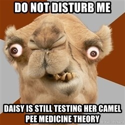 Crazy Camel lol - DO NOT DISTURB ME DAISY IS STILL TESTING HER CAMEL PEE MEDICINE THEORY
