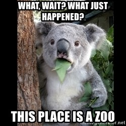 Koala can't believe it - WHaT, wait? What just happened? This place is a zoo