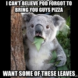 Koala can't believe it - I can't believe pod forgot to bring you guys pizza want some of these leaves