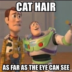 Buzz - Cat hair as far as the eye can see