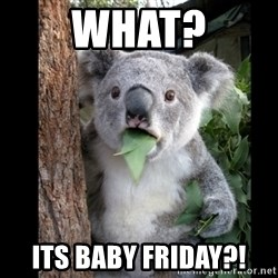 Koala can't believe it - What? Its baby Friday?!