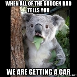 Koala can't believe it - When all of the sudden dad tells you We are getting a car