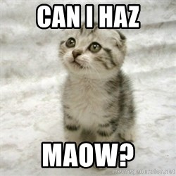 Can haz cat - Can I haz Maow?