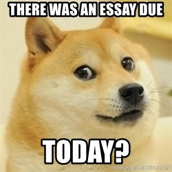 Dogeeeee - THERE WAS AN ESSAY DUE TODAY?