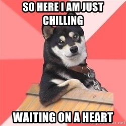 Cool Dog - so here i am just chilling waiting on a heart