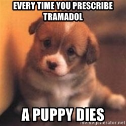 cute puppy - Every time you prescribe tramadol A puppy dies
