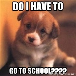 cute puppy - DO I HAVE TO  GO TO SCHOOL????