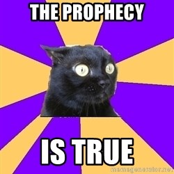 Anxiety Cat - the prophecy is true