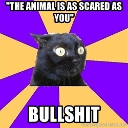 "Anxiety Cat - ""The animal is as scared as you"" BULLSHIT"